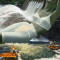 W Hydroelectric Power thumbnail